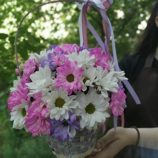 Хризантема радужная в корзинке