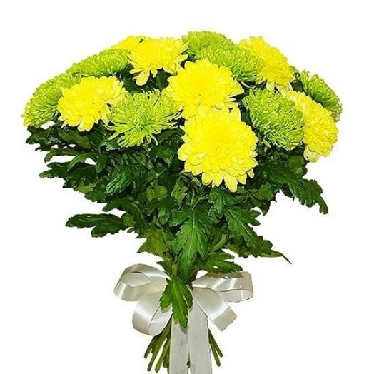 Букет из 15 желто-зеленых хризантем