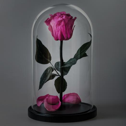 Роза в колбе ярко-розовая премиум