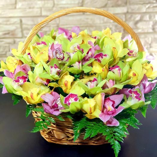51 орхидея в корзине