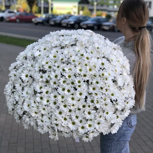 The bouquet of white camomile chrysanthemums a cloud of Air out of 71 branches