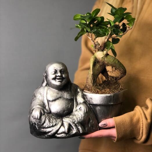 Фикус-бонсай и Будда