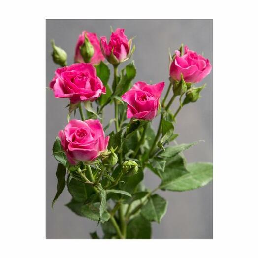 ✅ Роза Кустовая Лиана (кол-во любое, ветка)