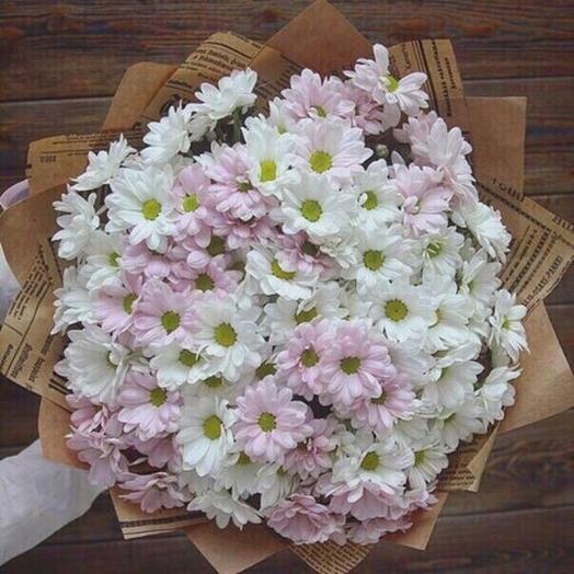 15 ромашковых хризантем. Код 19001
