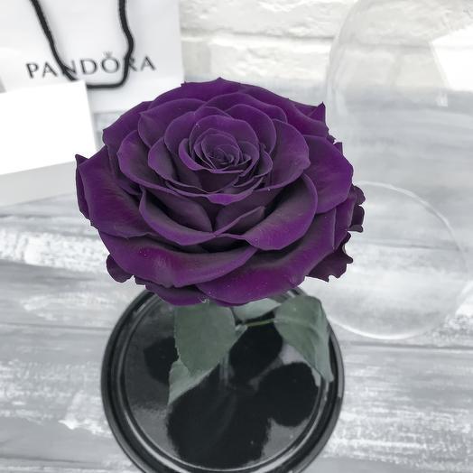 Роза в колбе king: букеты цветов на заказ Flowwow