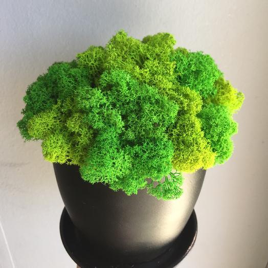 Стабилизированный мох 2: букеты цветов на заказ Flowwow