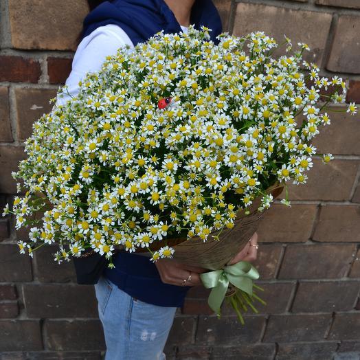 Ромашка с Божьей Коровкой: букеты цветов на заказ Flowwow