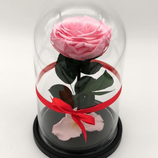 Роза King Розовая