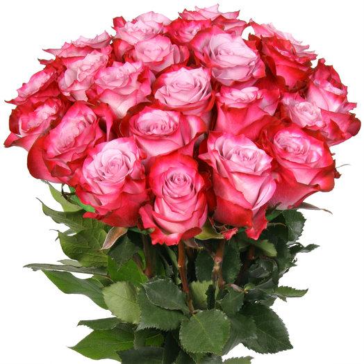 Букет из 25 розово-малиновых эквадорских роз: букеты цветов на заказ Flowwow