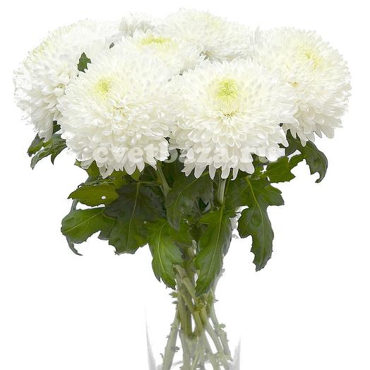 Хризантемы для любимой Мамы: букеты цветов на заказ Flowwow