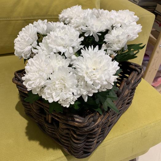 Корзинка с хризантемой: букеты цветов на заказ Flowwow