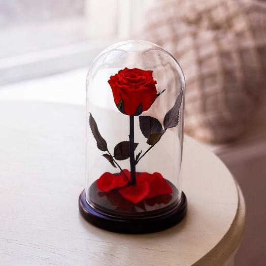 Роза в колбе «Premium» красная