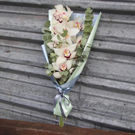 Орхидея Цимбидиум