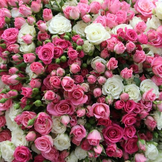 Marshmallow cloud of spray roses