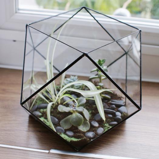 Флорариум многоугольник: букеты цветов на заказ Flowwow