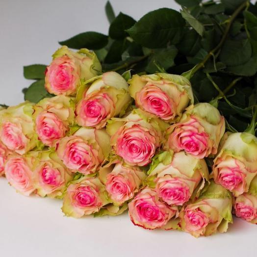 Роза Россия «Эсперанса»
