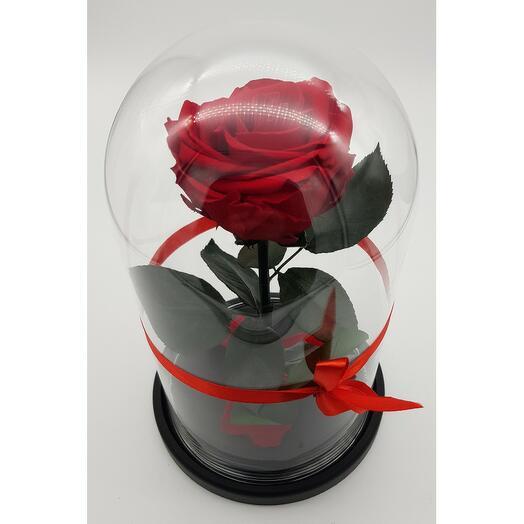 Роза в колбе премиум хит бордовая 27*15*11см