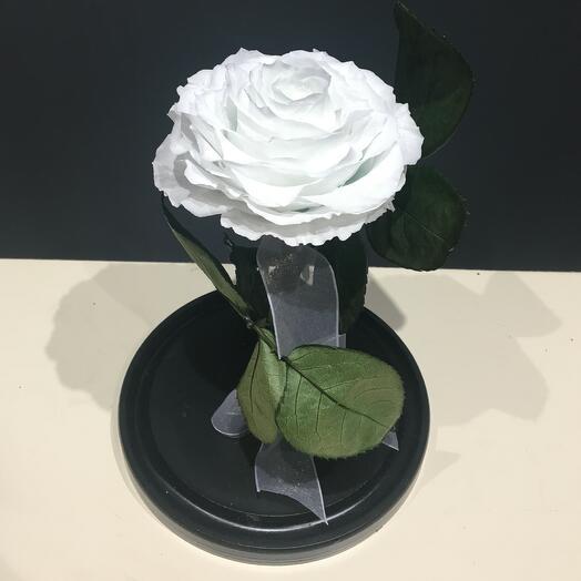 Роза белая в колбе ( бутон до 12 см)