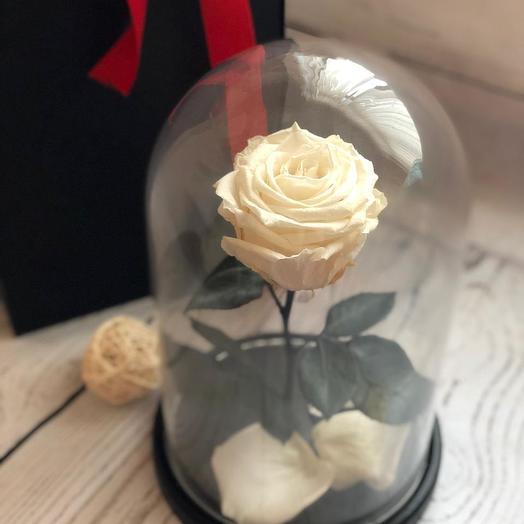 Живая белая роза в колбе: букеты цветов на заказ Flowwow
