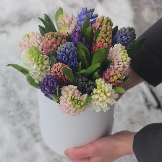17 гиацинтов в коробке: букеты цветов на заказ Flowwow