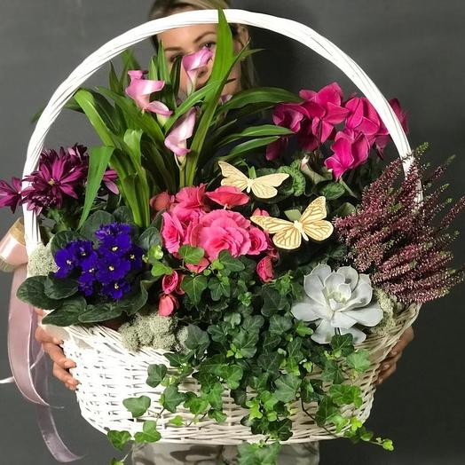 Корзина с горшечными растениями: букеты цветов на заказ Flowwow