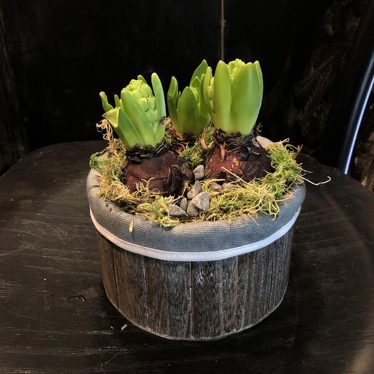 Трио из гиацинтов в стильном кашпо: букеты цветов на заказ Flowwow