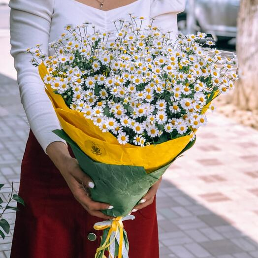 Bouquet of fragrant daisies