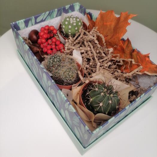 Кактусовая оранжерея