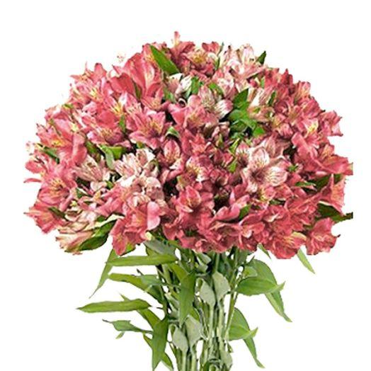 Букет из 61 розовой альстромерии: букеты цветов на заказ Flowwow