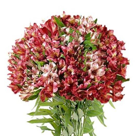 Букет из 101 красной альстромерии: букеты цветов на заказ Flowwow