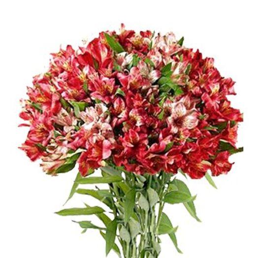Букет из 55 красных альстромерий: букеты цветов на заказ Flowwow