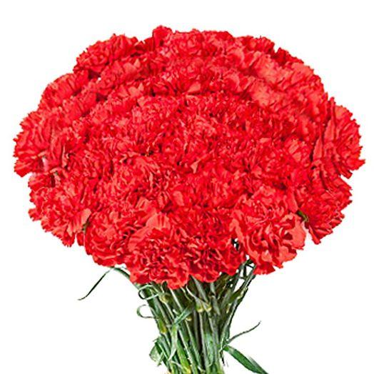Букет из 51 красной гвоздики: букеты цветов на заказ Flowwow