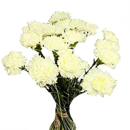 Букет из 11 белых гвоздик: букеты цветов на заказ Flowwow