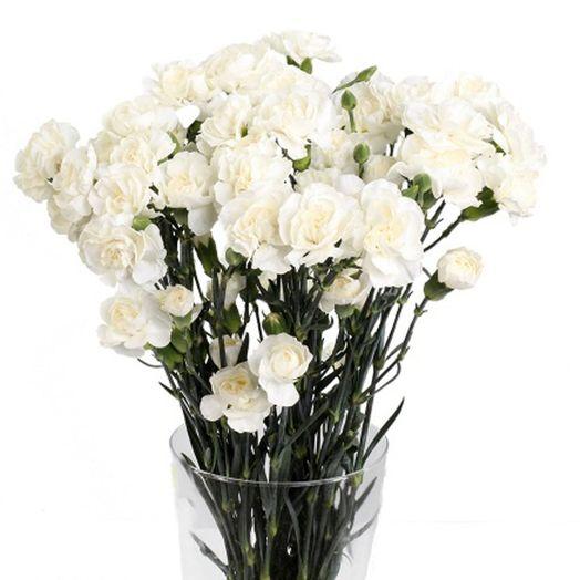 Букет из 25 белых гвоздик: букеты цветов на заказ Flowwow