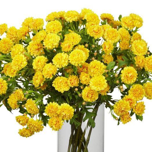 Букет из 55 желтых гвоздик: букеты цветов на заказ Flowwow