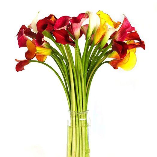 Букет из 31 разноцветной каллы: букеты цветов на заказ Flowwow