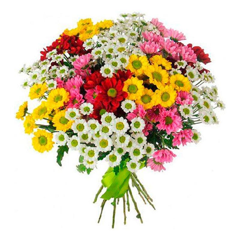 Букет из 55 разноцветных хризантем: букеты цветов на заказ Flowwow