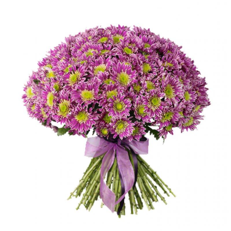 Букет из 45 розовых хризантем: букеты цветов на заказ Flowwow