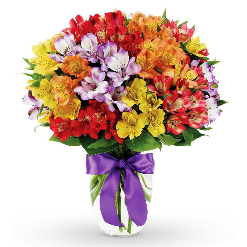 Амелия белгород цветы