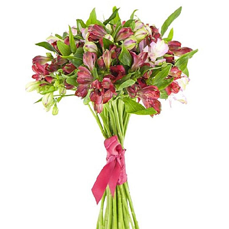 Букет из 15 красных альстромерий: букеты цветов на заказ Flowwow