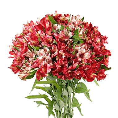 Букет из 35 красных альстромерий: букеты цветов на заказ Flowwow