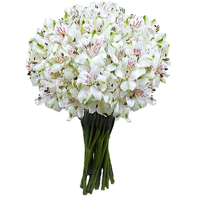 Букет из 35 белых альстромерий: букеты цветов на заказ Flowwow