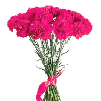 Букет из 10 розовых гвоздик: букеты цветов на заказ Flowwow