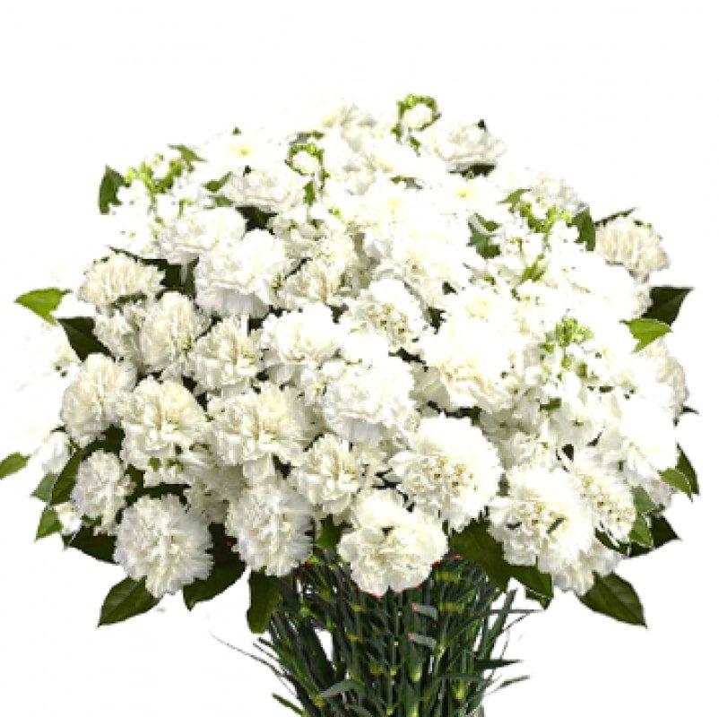 Букет из 100 белых гвоздик: букеты цветов на заказ Flowwow