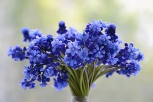 Доставка цветов в Краснодаре - flowwow.com
